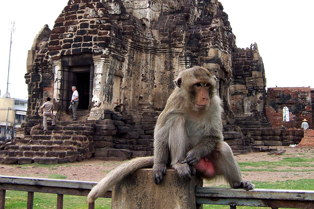 Monkey in front of the monkey temple in Lopburi city centre.
