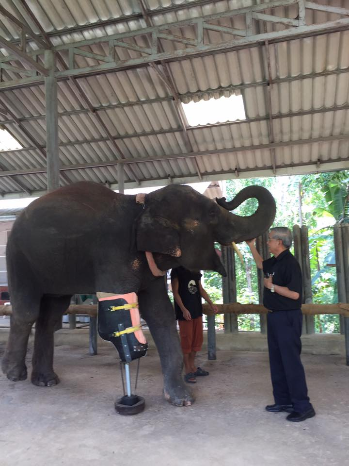 Friends of the Asia Elephant foundation 01