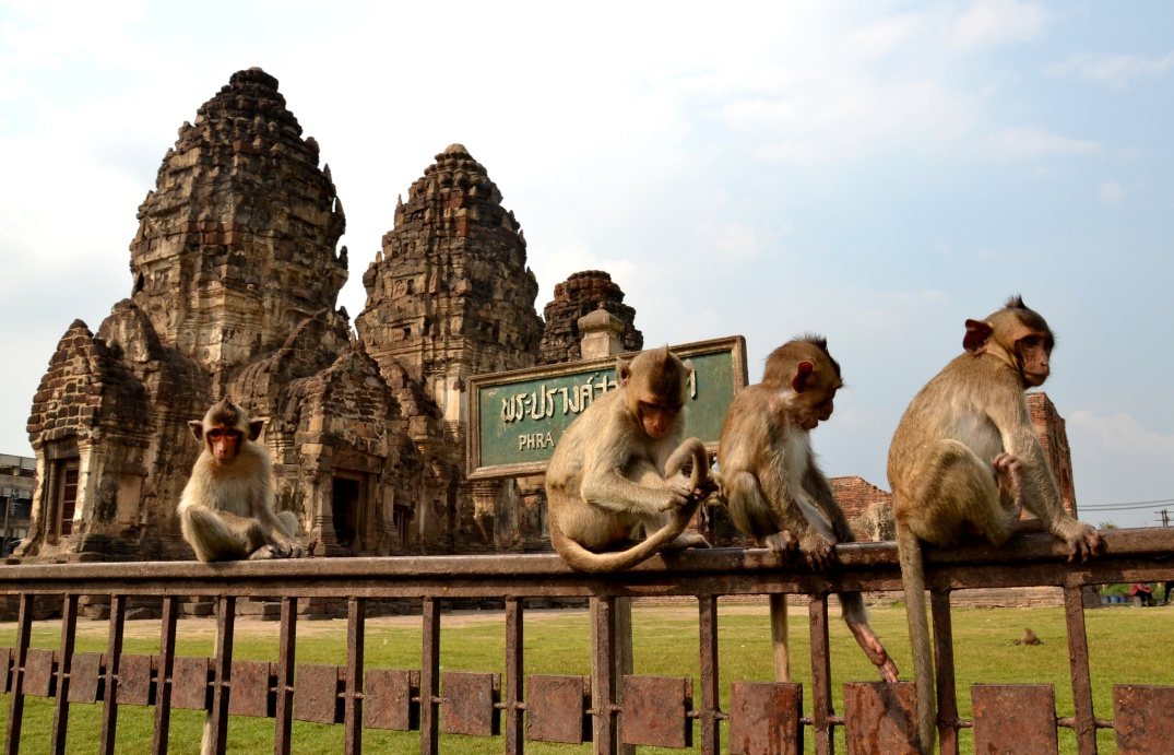 Lopburi Monkey Temple. Flickr; Matt Hulland